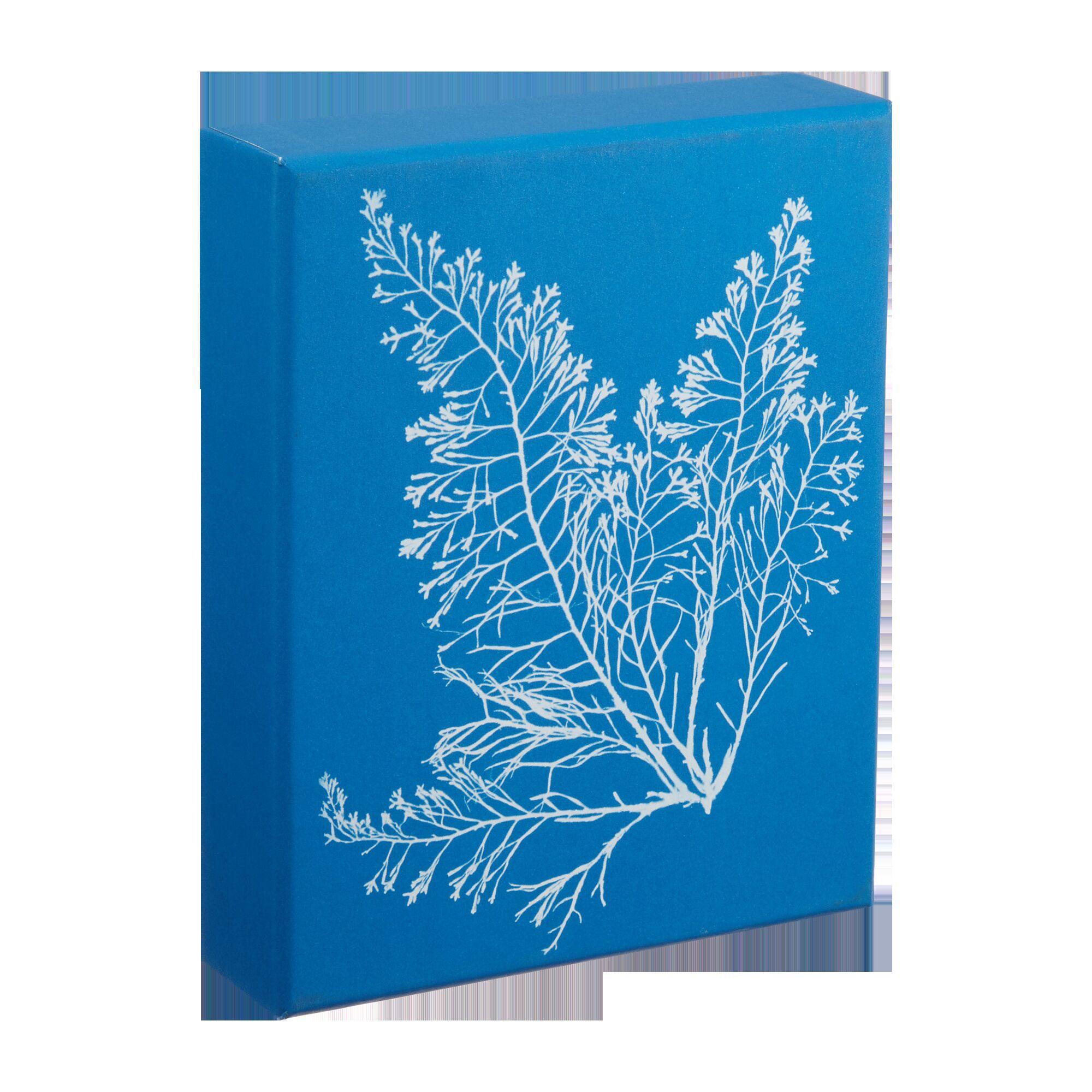 Sunprint Notecards: The Cyanotypes of Anna Atkins